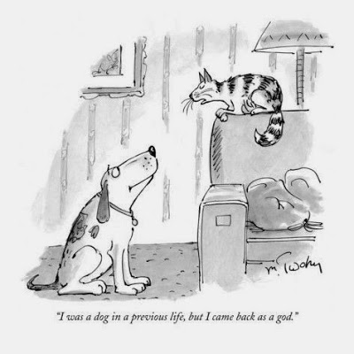 View joke - My cat was talking to my dog the other day: I was a dog in a previous life, but I came back as a god.