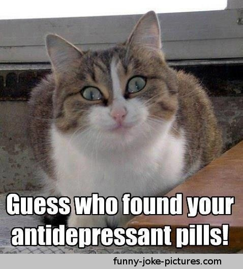 View joke - Guess who found your antidepressant pills