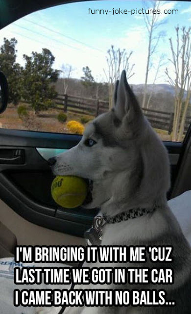View joke - He does not trust you anymore. - I'm bringing it with me, because last time we got in the car I came back with no balls ...