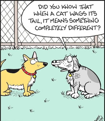 View joke - - Dude, what happened ? - Did you know that when a cat wags its tail, it means something completely different ?