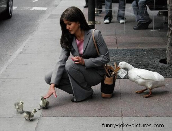 View joke - Teamwork. Stealing level: duck.