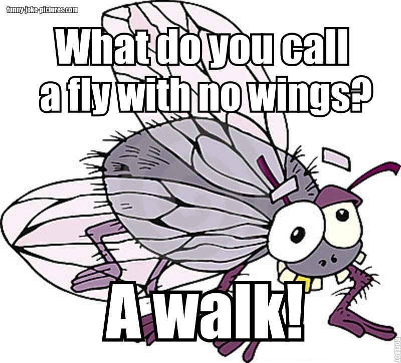 View joke - What do you call a fly with no wings ? A walk !