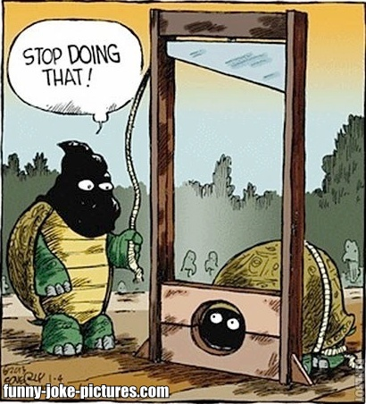 View joke - Turtle, stop doing that !