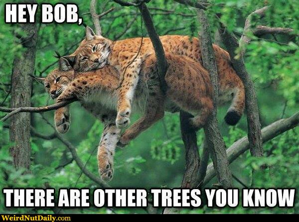 View joke - Hey Bob, there are other trees you know