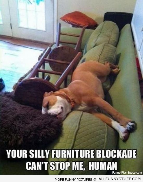 View joke - You failed again, human. Your silly furniture blockade can't stop me