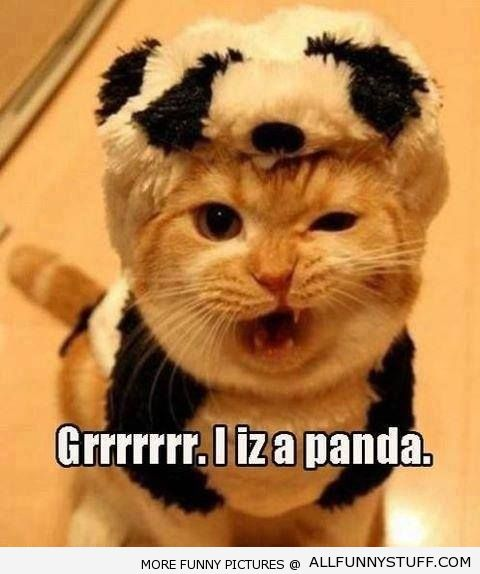 View joke - This kitten is actually a panda. A ferocious panda.