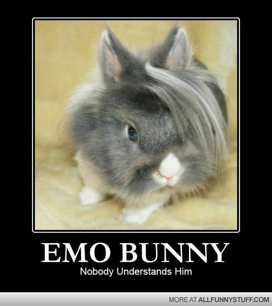 View joke - Emo bunny. Nobody understands him. And don't even ask him anything about his haircut.