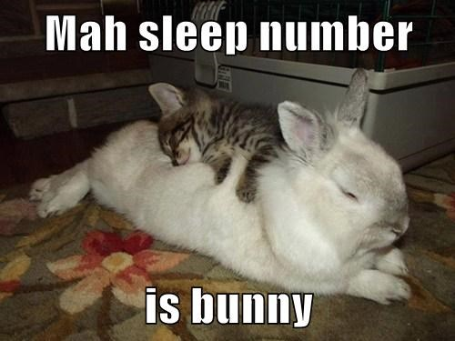 View joke - My sleep number is bunny