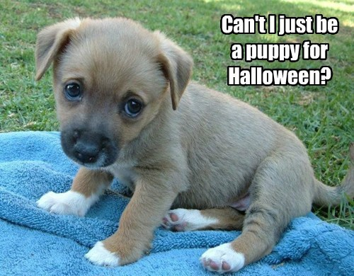 View joke - Can't I just be a puppy for Halloween ?