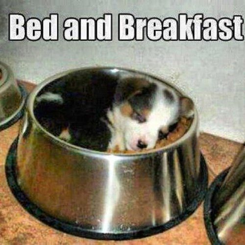 View joke - Bed and breakfast. We all love it.