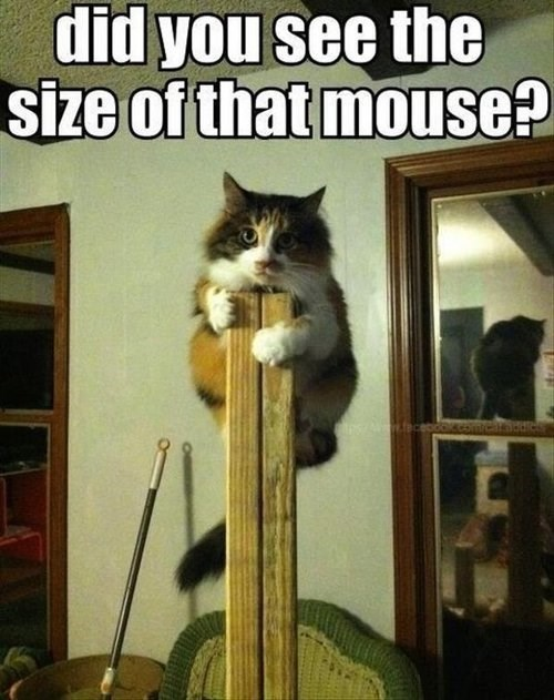 View joke - Did you see the size of that mouse? I'm not going down.