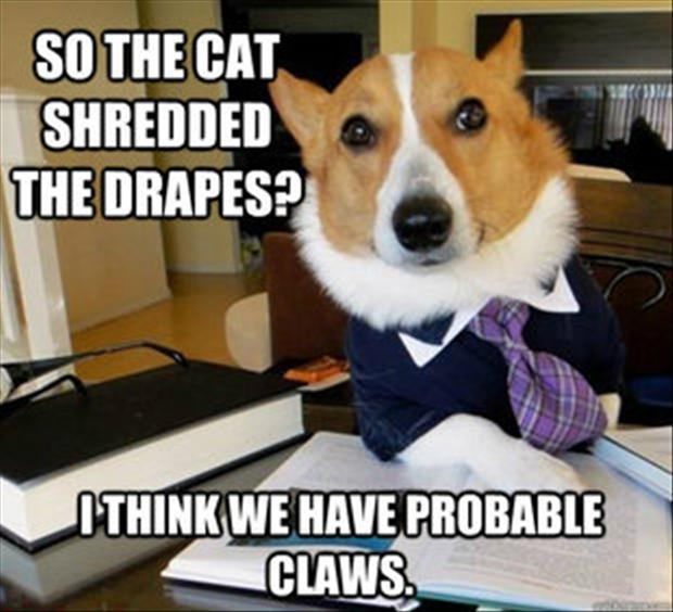 View joke - So, the cat shredded the drapes? I think we have probable claws.