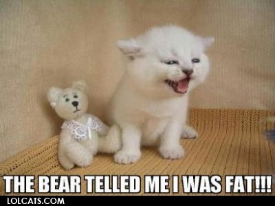 View joke - Bad little bear. He told my kitten she was fat.